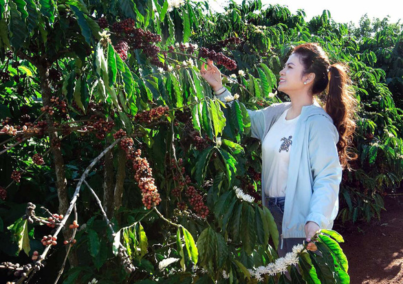 Le Hoang Diep Thao touches on a branch of coffee in a supplied photo