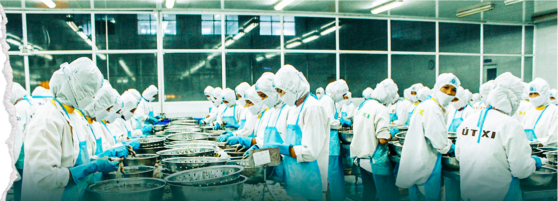 Inside a prawn processing factory in Soc Trang Province. Photo: Chi Quoc/Tuoi Tre