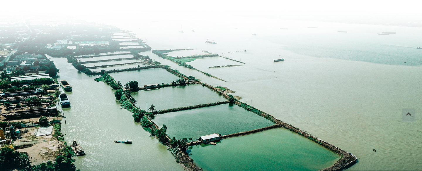 Basa fish farming on Hau River. Photo: Chi Quoc/Tuoi Tre