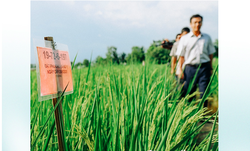 A field for crafting sample seeds seen in Ca Mau Province. Photo: Chi Quoc/Tuoi Tre