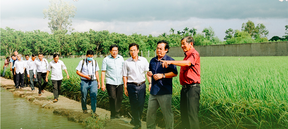 Ho Quang Cua (red shirt) introduces Bac Lieu Province's officials to his ST24 and ST25 rice in his field in Soc Trang Province. Photo: Chi Quoc/Tuoi Tre