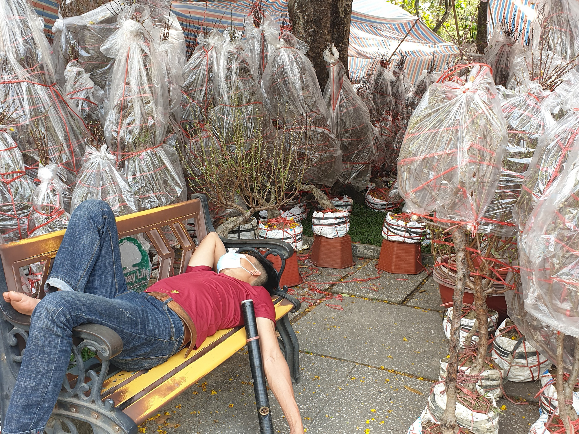 A seller takes a nap as no customers visit a makeshift peach blossom shop at the 23/9 Park in District 1, Ho Chi Minh City, February 2021. Photo: Nguyen Tri / Tuoi Tre