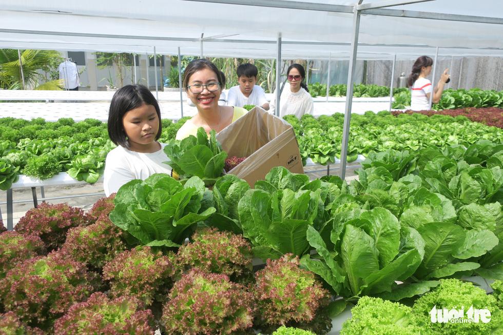 Saigon hydroponic farm brings customers freshest produce in town