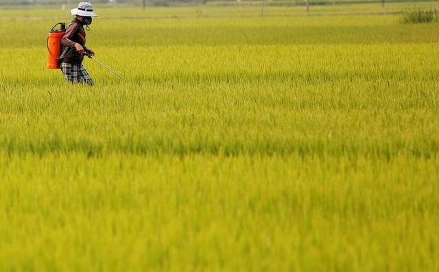 Asia rice: Indian rates scale 3-year peak; Vietnam hit by container shortage