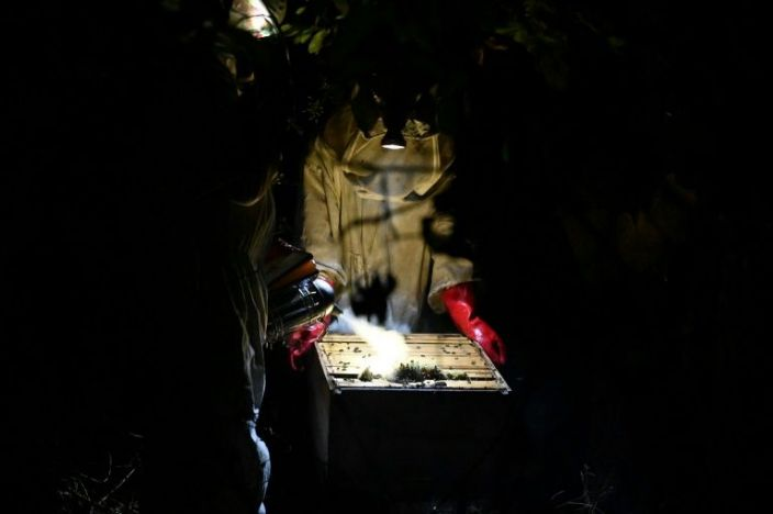 Beekeepers equiped with suits, masks,gloves, smokers and headlamps harvesting honey on January 19, 2021 near Toumodi, central region in Ivory Coast. Photo: AFP