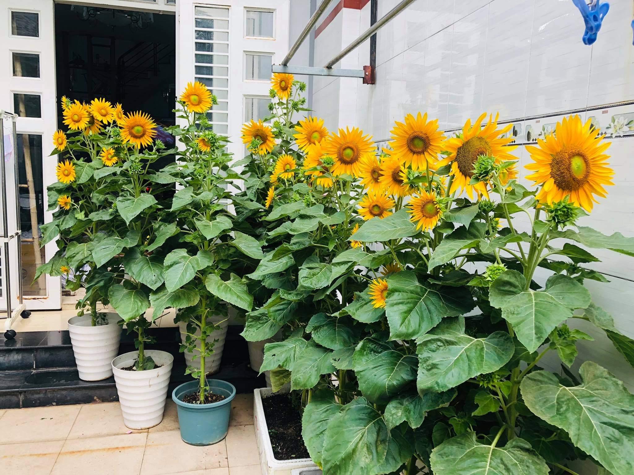 Saigon mother finds peace, not profit, in urban garden