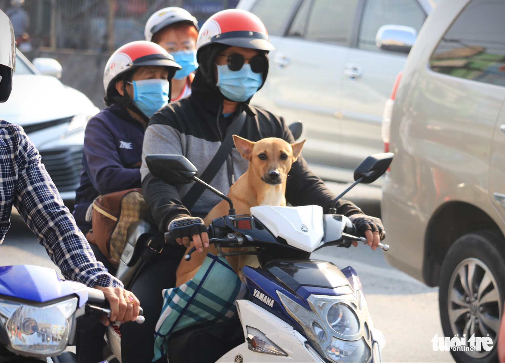 A family carries their pet as they travel back to Ho Chi Minh City, February 16, 2021. Photo: Nhat Thinh / Tuoi Tre