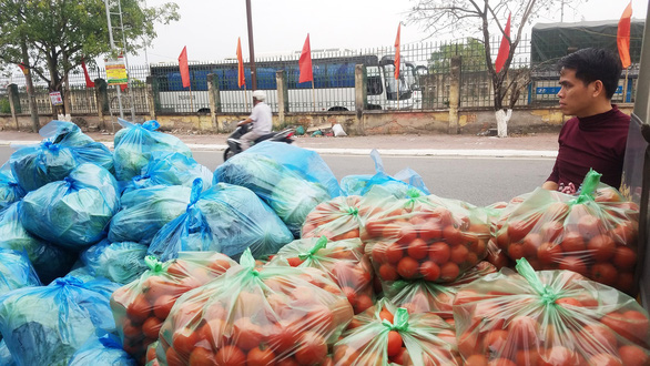 Cabbage and tomato are purchased in support for farmers in Tien Lang District, Hai Phong City, Vietnam. Photo: Bao Long / Tuoi Tre