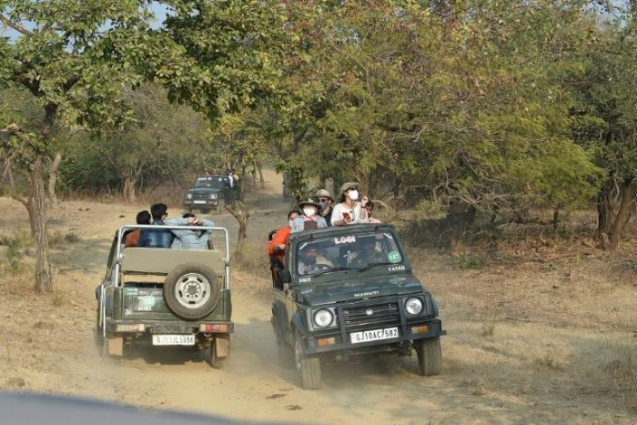 In this picture taken on January 5, 2021 tourists ride jeeps to catch a glimpse of Asiatic lions at the Gir National Park and Sanctuary at Sasan Gir, some 330 kilometers from Ahmedabad. Photo: AFP