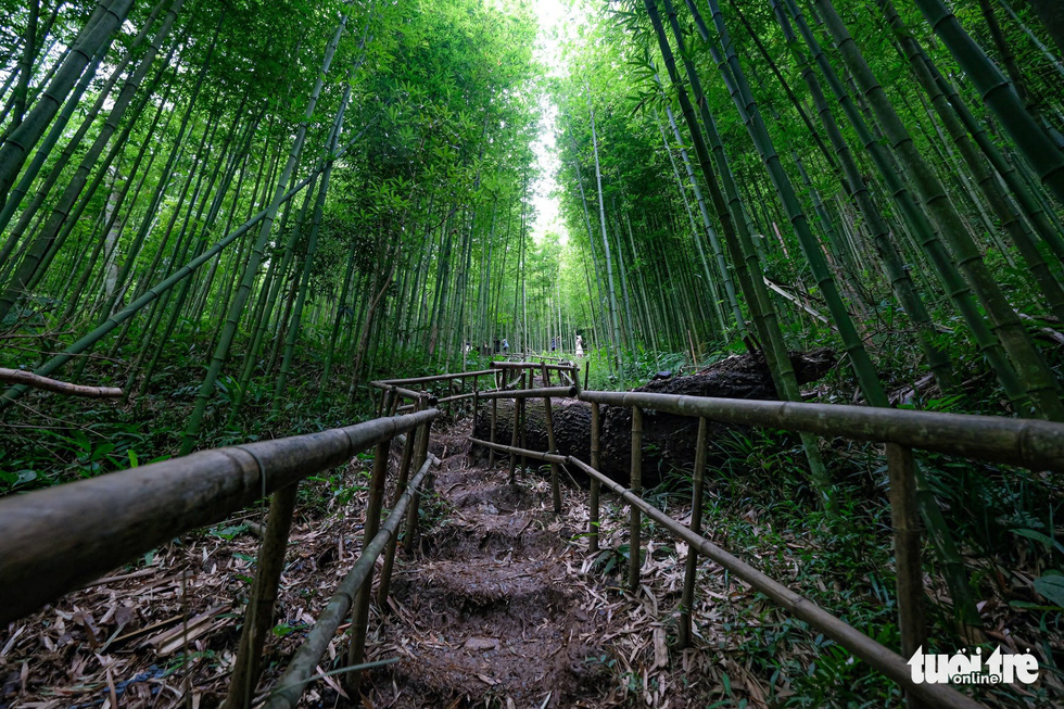 A tiny lane built inside the bamboo forest in Na Hang Tua Chu Village. Photo: Nam Tran/Tuoi Tre