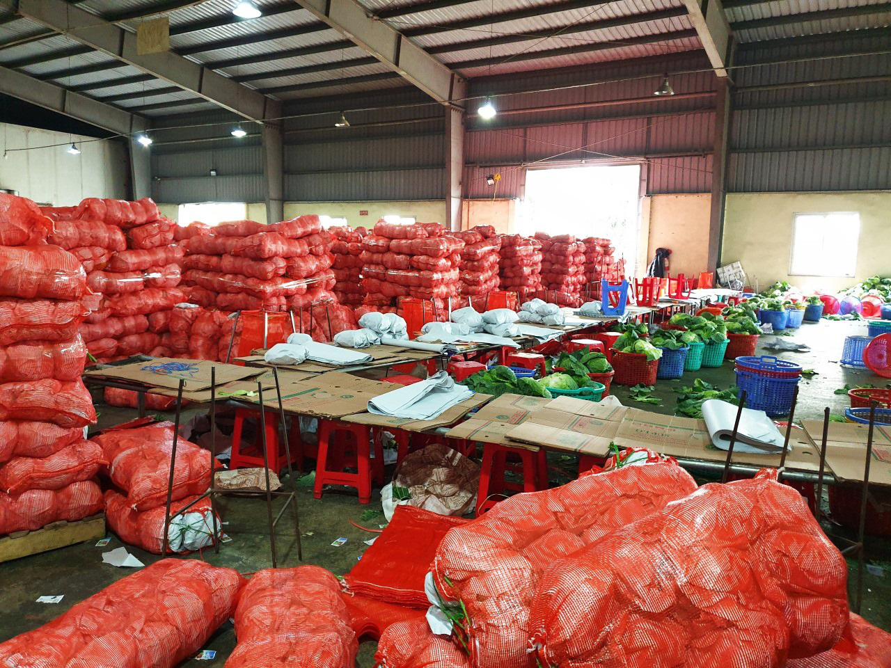 Large bags of cabbage rescued from northern Hai Duong Province are stored at a warehouse in Ho Chi Minh City, February 23, 2021. Photo: Nhat Thinh / Tuoi Tre