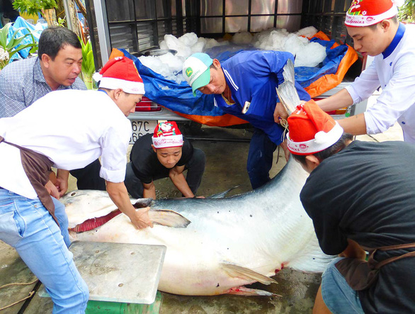 Lam Van Hoang receives tempting offers from traders for his lucky catch, a ca tra dau (Mekong giant catfish), in this supplied photo.