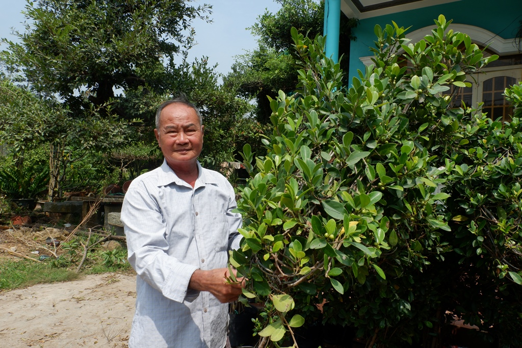 Nguyen Van Cong, better known as Nam Cong, works on weeping fig plants in his garden on January 30, 2021, in Cho Lach District, Ben Tre Province. Photo: Son Lam/ Tuoi Tre