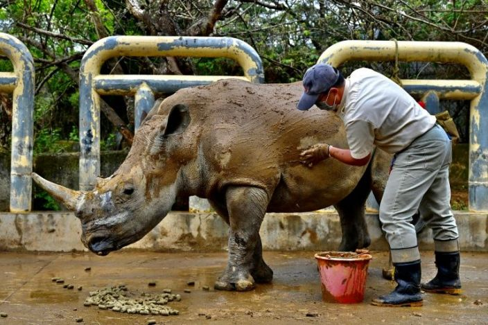 Leofoo Safari Park imported eight rhinos from Africa in 1979 and now has the most successful breeding programme in Asia with 23 animals in its herd. Photo: AFP