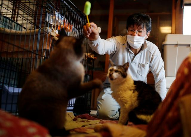Sakae Kato plays with cats that he rescued, called Mokkun and Charm, who are both infected with feline leukemia virus, at his home, in a restricted zone in Namie, Fukushima Prefecture, Japan, February 20, 2021. Photo: Reuters