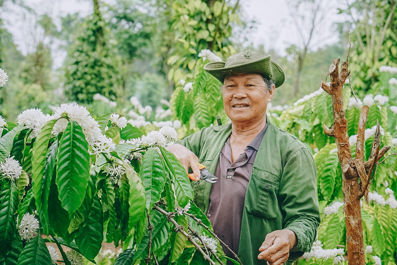 Nguyen's father works on his coffee garden in the Central Highland Province of Dak Lak. Photo: Van Nguyen