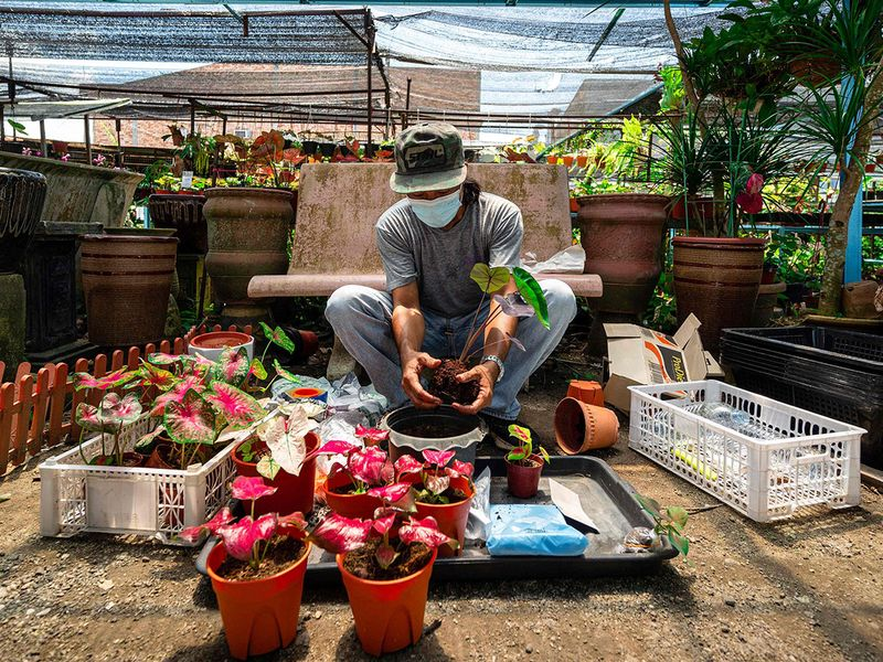 Worker takes care of potted plants in a nursery in Malaysia. Photo: AFP